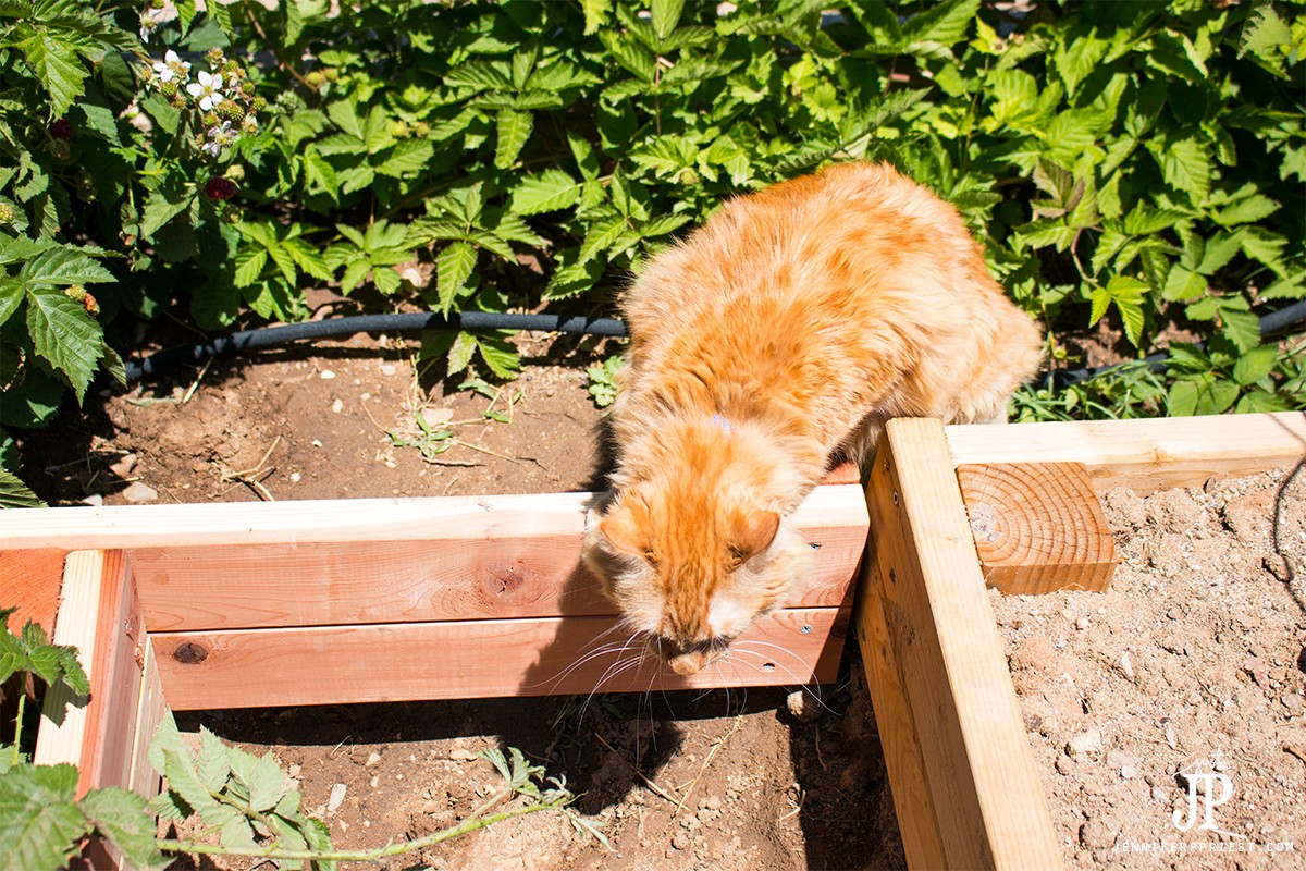 "Purina has declared National ""Take your cat on an Adventure"" Day on June 15. Are you game? Follow Adventure Kitty (yes, that's her name!) on an outdoor adventure in our own backyard and get ideas on how to take your kitty on an adventure #MyGreatCat @ProPlanCat [AD]"