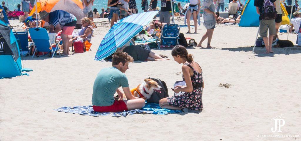 2016-07-02-Corgi-Dog-Day