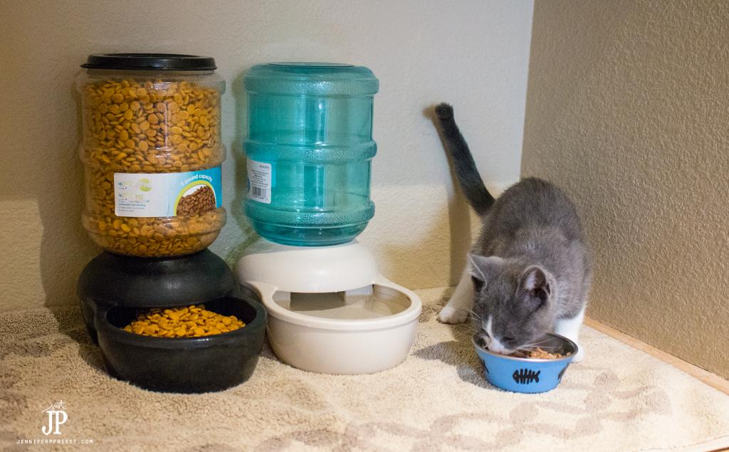 Cat-Food-Station