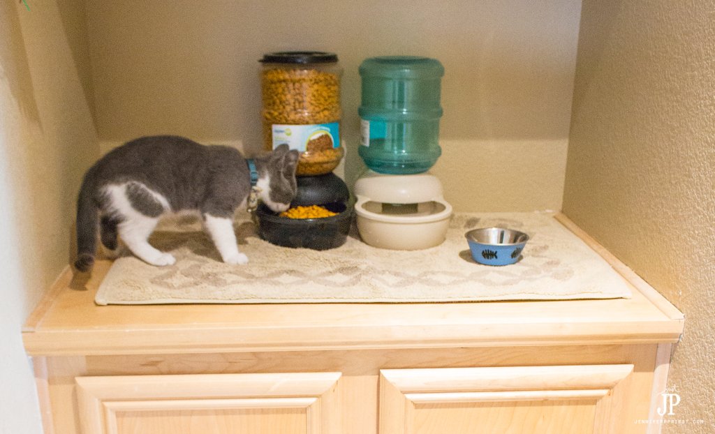 How To Set Up A Diy Cat Food Station