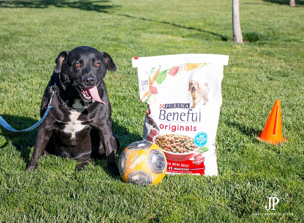 cooper-loves-the-new-recipe-purina-beneful-jenniferppriest