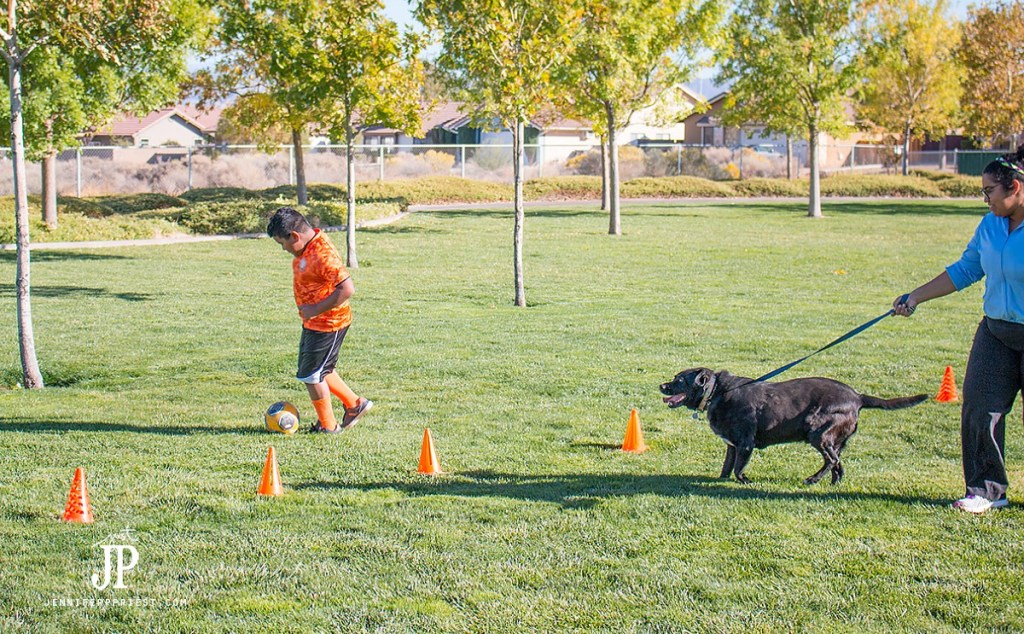 Training Your Dog To Trail Run