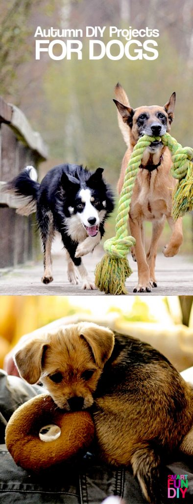 Autumn DIY projects for dogs - treats and toys to make for your pets in FALL