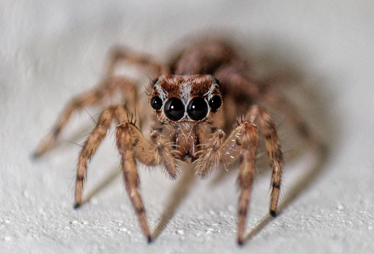 spider control kolkata