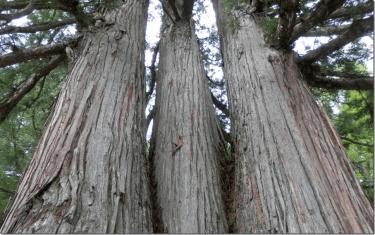 木材に対する誤解と実際:木は水に強い・弱い?上棟時の雨ぬれが心配!【2/6】