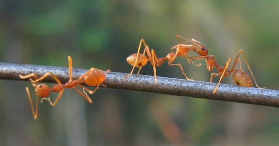 Diese natrlichen Hausmittel helfen gegen Ameisen