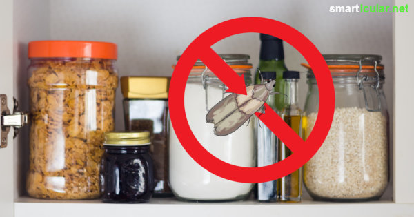 Lebensmittelmotten mit Hausmitteln nachhaltig bekmpfen