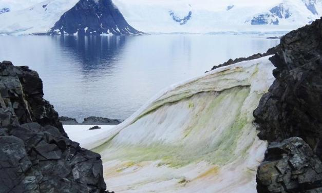 Snow is turning green in Antarctica