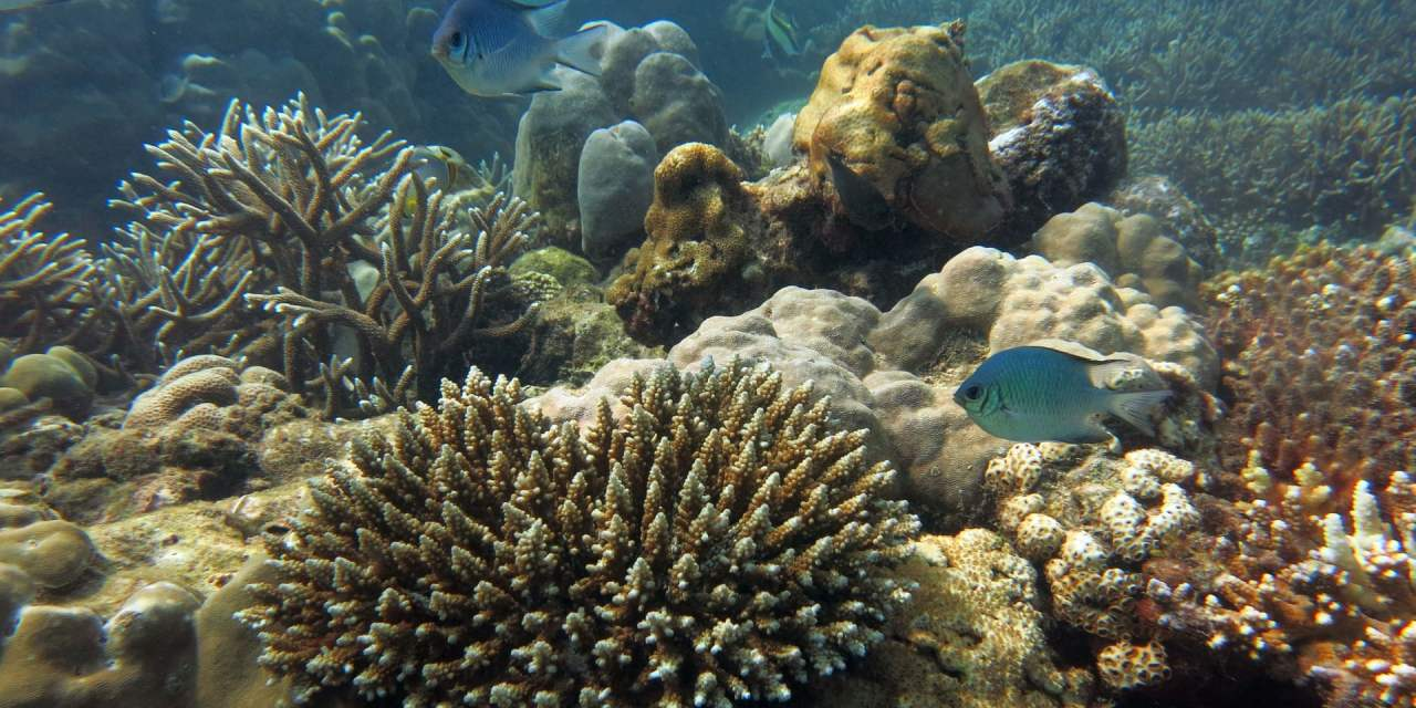Commonwealth nations to protect coral reefs with satellite technology