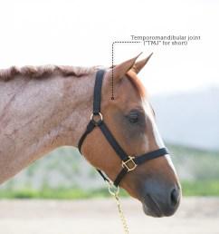 horse gi tract diagram [ 1800 x 1868 Pixel ]