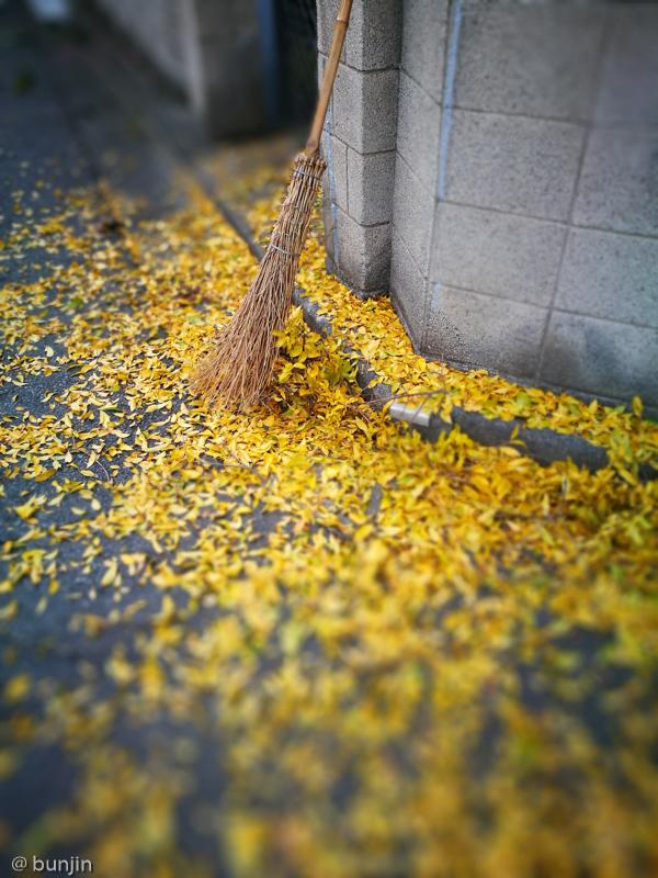 秋を集める