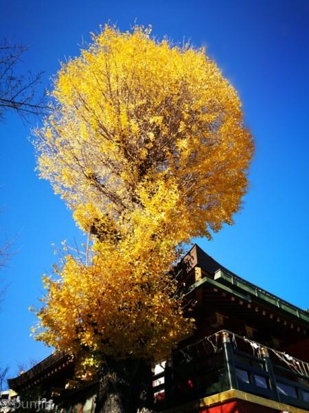 黄色のツリー