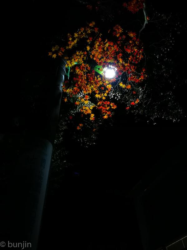 街角、夜、紅葉