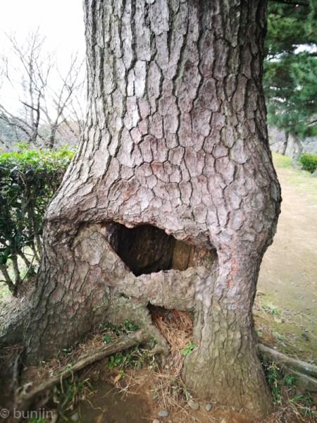 人面樹が現れた!