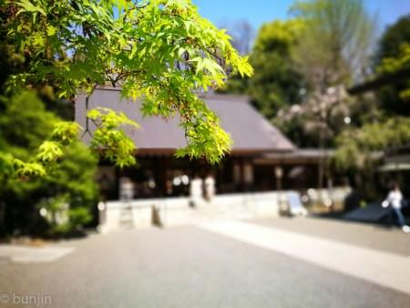 乃木坂も新緑の季節
