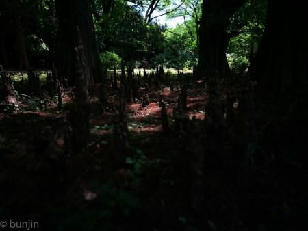 密林へ踏み入る