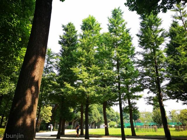 夏の朝、木陰のありがたみ