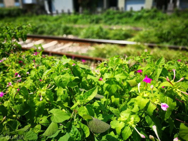 線路際の夏
