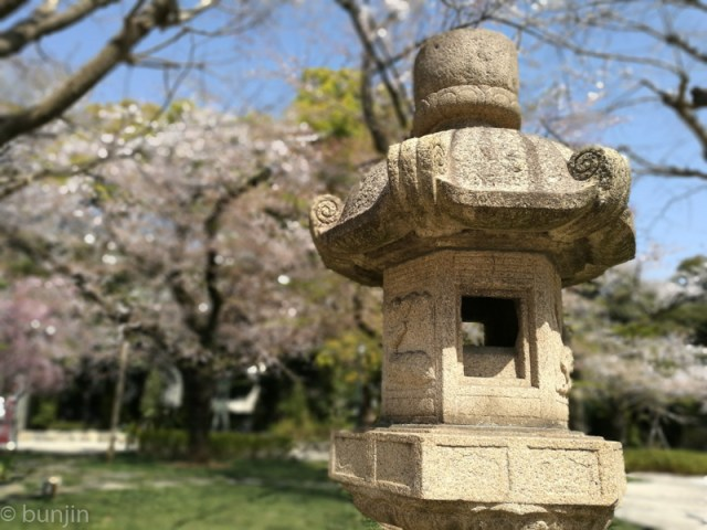 A lantern in the cherry blossom trees
