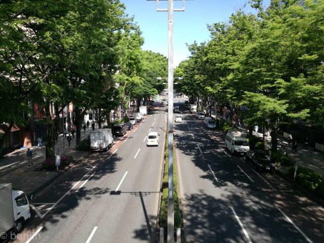 Omotesando in early summer