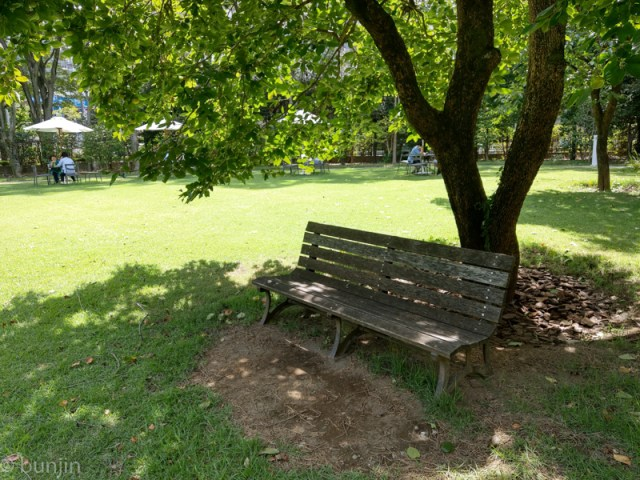 A bench under a tree