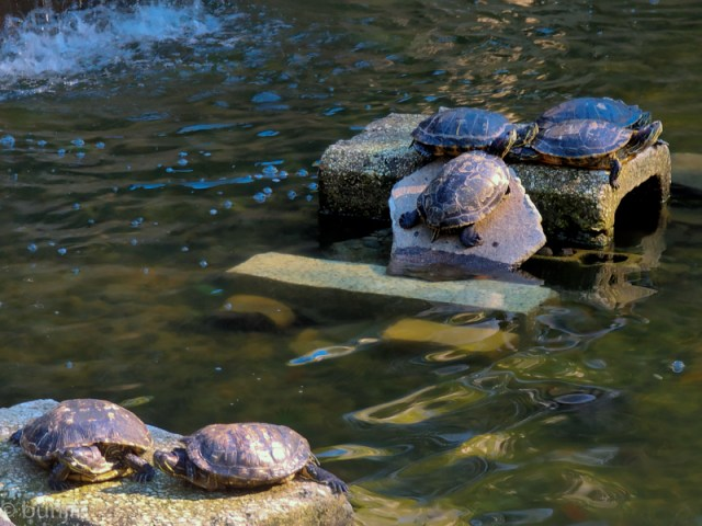 Turtles are playing in the sunshine.