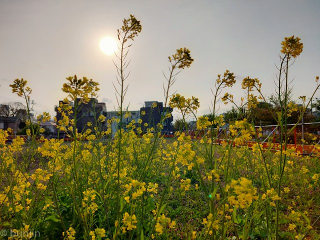Vacant land transformed into a flower garden