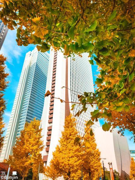 Shinjuku in late autumn