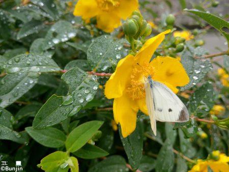 A butterfly in the rain