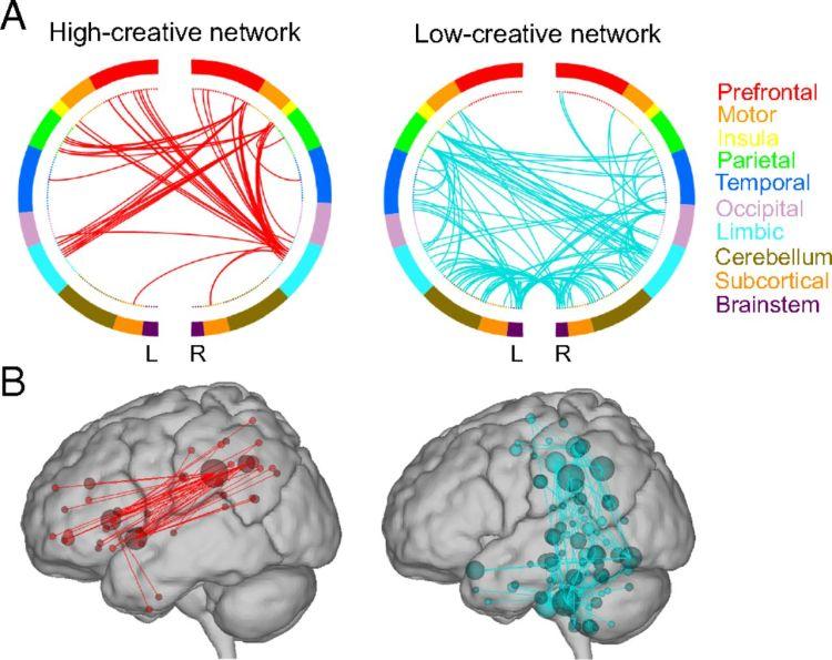 La sincronía entre las redes neuronales por defecto y las redes de control ejecutivo parece desempeñar un papel importante en la creatividad [Fuente]