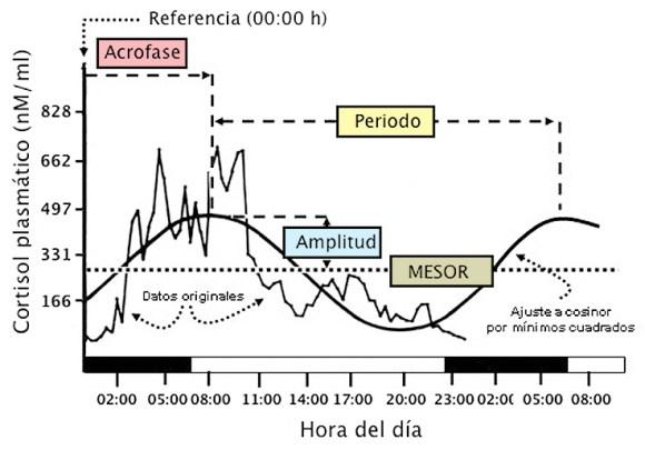 Un ejemplo del ritmo del cortisol en sangre a lo largo del día.