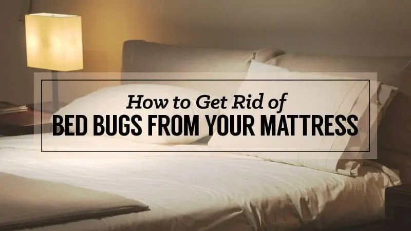 How to Get Rid of Bed Bugs from Your Mattress