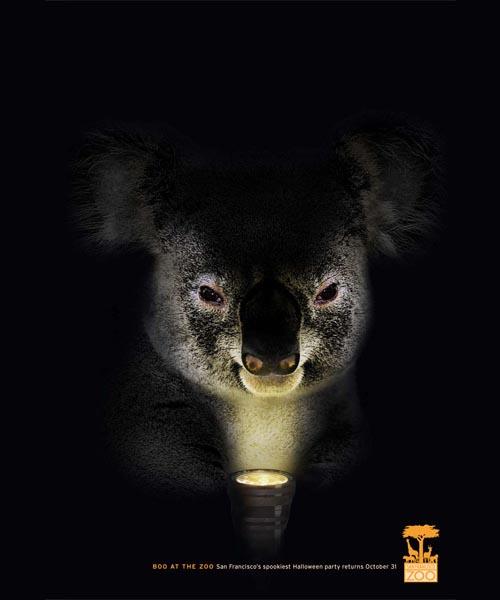 San Fransisco Zoo: Koala
