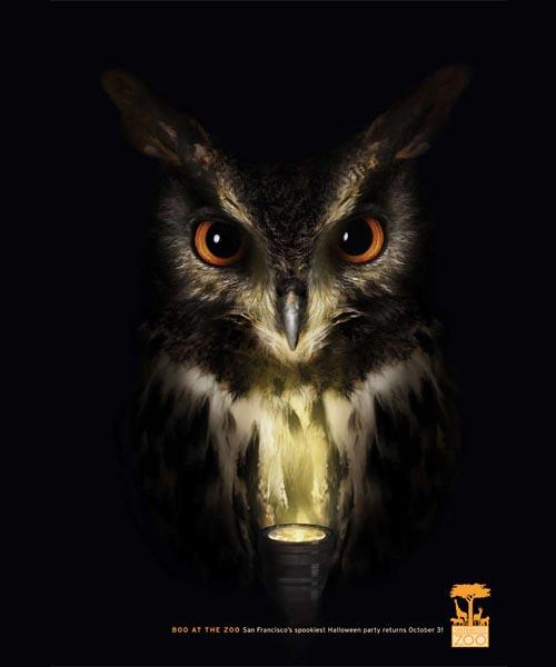 San Fransisco Zoo: Owl