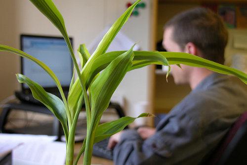 Office plant