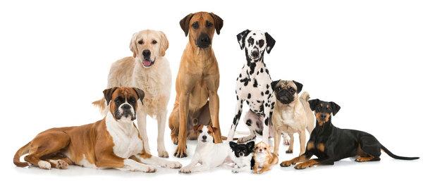 Dog business