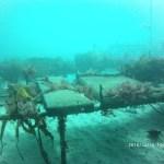 REMONOR : Suivi des huîtres en élevage