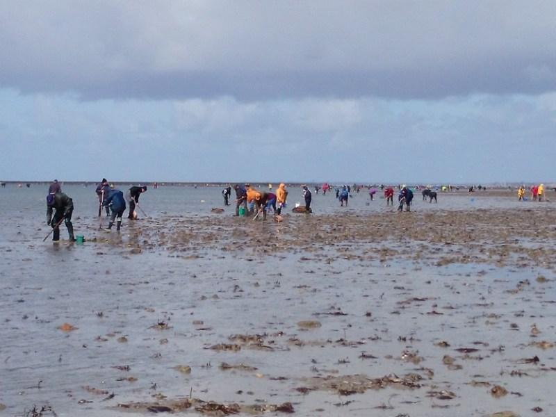 Plage de Bricqueville sur Mer un jour de grande marée (SMEL)