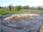 Un rorqual de 7 mètres échoué à Créances