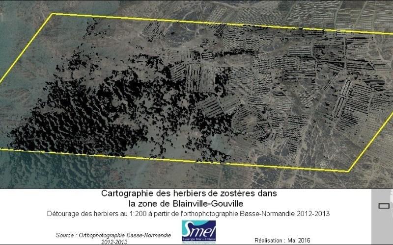 Détourage des herbiers de zostères d'après l'orthophotographie Basse-Normandie 2012-2013 (@SMEL)