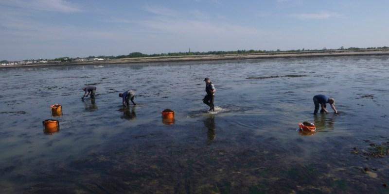 Pêche expérimentale de sargasses à Grandcamp Maisy (@SMEL)