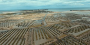 Affinage des huîtres en Normandie ?