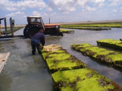 Tests de pêche manuelle à Gouville / Mer (@SMEL)