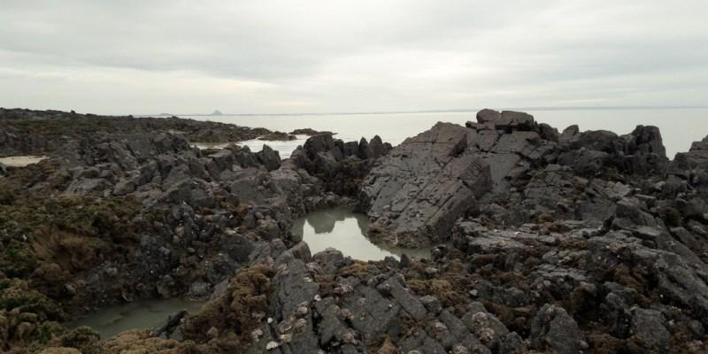 Colonisation des huitres au pied des falaises de Carolles (@SMEL)