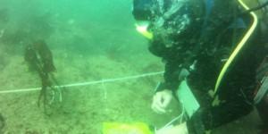 Le suivi des macroalgues subtidales dans le cadre de la DCE