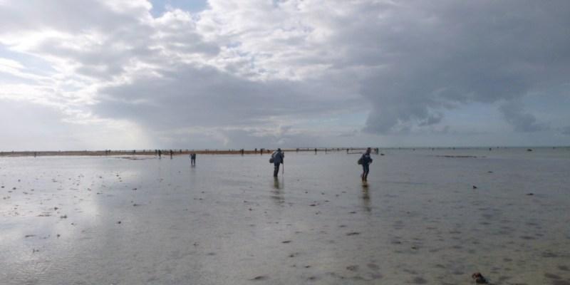 Pêcheurs de palourde sur l'estran de Saint-Martin-de-Bréhal (@SMEL)