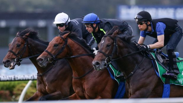 Imposing record: Japanese trainer Yasutoshi Ikee will have Tosen Stardom (inside) and World Ace (middle) racing at Rosehill on Saturday.