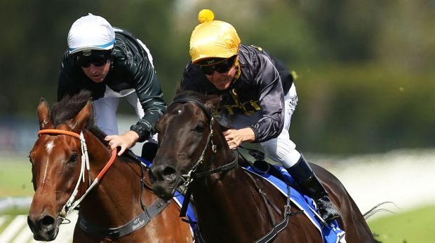 Unlikely to back up: Kerrin McEvoy riding Excess Knowledge (right) wins the Doncaster Prelude at Rosehill Gardens on Saturday.