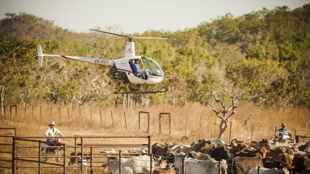 The newly acquired 705,700 hectare station is believed to be purchased with 40,000 head of cattle.