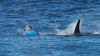 Moment of terror: Mick Fanning at Jeffrey's Bay.